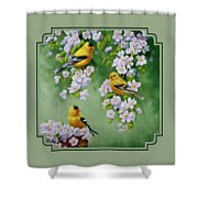 American Goldfinch Spring Shower Curtain by Crista Forest