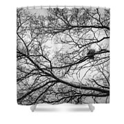Snow On Bare Branches Shower Curtain