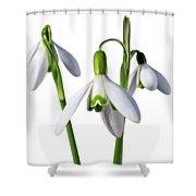 Spring Springs Eternal Shower Curtain