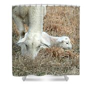 L Is For Lamb Shower Curtain