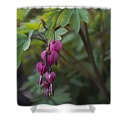 Heart Focused Shower Curtain