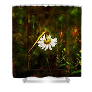 Broken Hearted Oxeye Daisy Asteraceae  Shower Curtain