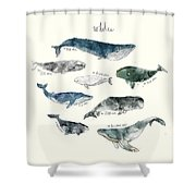 Whales Shower Curtain by Amy Hamilton