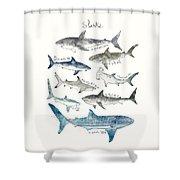 Sharks Shower Curtain by Amy Hamilton