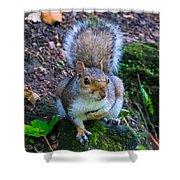 Glasgow Squirrel Shower Curtain