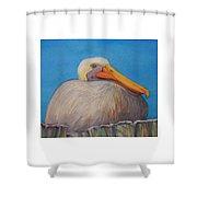 Mayport Florida Pelican Shower Curtain