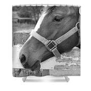 Horse Face Shower Curtain