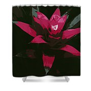 Pinky Poster Shower Curtain