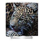 Jaguar Cub Shower Curtain