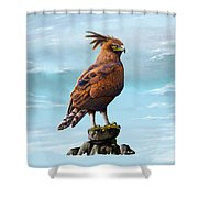 Long Crested Eagle Shower Curtain