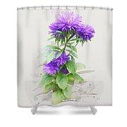 Purple Aster Shower Curtain