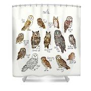Owls Shower Curtain by Amy Hamilton