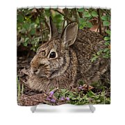 A Very Fine Bunny Resting Under The Lilac Bush Shower Curtain
