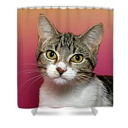 Life Is Better With A Cat Shower Curtain