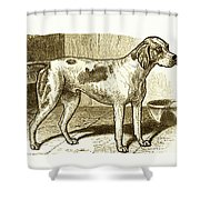 Vintage Sepia German Shorthaired Pointer Shower Curtain