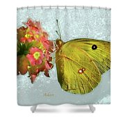 Southern Dogface Butterfly Feasting On December Lantanas Austin V2 Shower Curtain