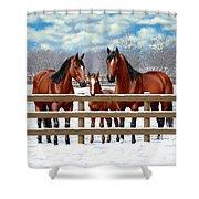 Bay Quarter Horses In Snow Shower Curtain