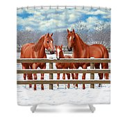 Red Sorrel Quarter Horses In Snow Shower Curtain by Crista Forest
