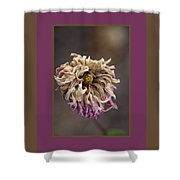 Drying And Aged Dahlia Shower Curtain