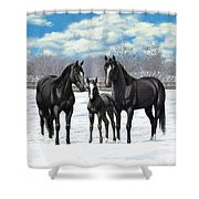 Black Horses In Winter Pasture Shower Curtain