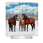 Bay Horses In Winter Pasture Shower Curtain by Crista Forest