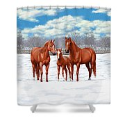 Chestnut Horses In Winter Pasture Shower Curtain by Crista Forest