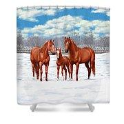 Chestnut Horses In Winter Pasture Shower Curtain