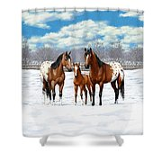 Bay Appaloosa Horses In Winter Pasture Shower Curtain