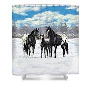 Black Appaloosa Horses In Winter Pasture Shower Curtain