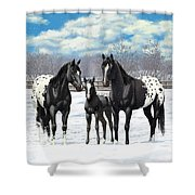 Black Appaloosa Horses In Winter Pasture Shower Curtain