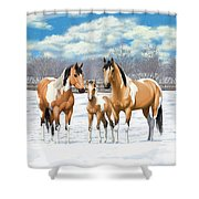 Buckskin Paint Horses In Winter Pasture Shower Curtain by Crista Forest