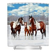 Bay Paint Horses In Winter Shower Curtain