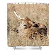 Prairie Longhorn Shower Curtain