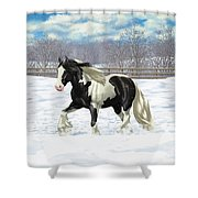 Black Pinto Gypsy Vanner In Snow Shower Curtain by Crista Forest