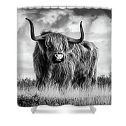 Highland Bull Shower Curtain