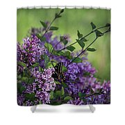 Lilac Enchantment Shower Curtain