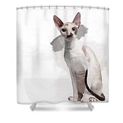 Beautiful Two-color Eyes Cornish Rex Shower Curtain