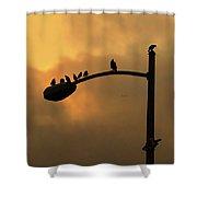 Birds On A Post Amber Light Detail Shower Curtain