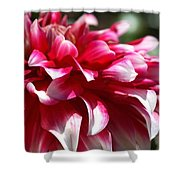oozing With Life Dahlia Shower Curtain