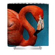 Profile Of An American Flamingo Shower Curtain