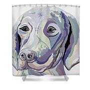 Weimaraner Denim Colors Shower Curtain