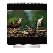 Osprey Family Night Shower Curtain