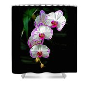 Cascading Orchid Beauties Shower Curtain