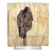 Portrait Of A Vulture Shower Curtain