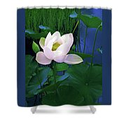Midnight Lotus Shower Curtain