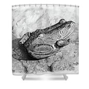 Frog On Rock Shower Curtain