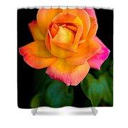 Arundel Rose Shower Curtain