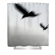 As The Crow Fly Shower Curtain