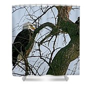 As The Eagle Looks On Shower Curtain