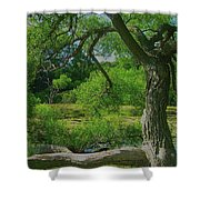 Ash Tree Shower Curtain